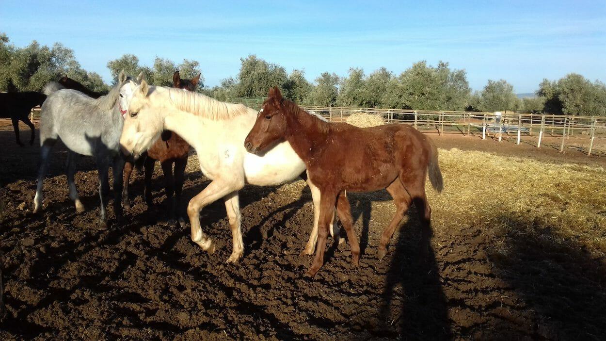 Cría de caballos Las Agrupadas